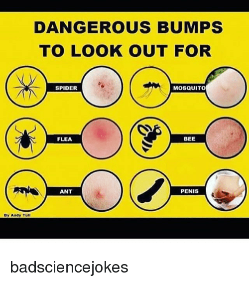 Memes, Spider, and Penis: DANGEROUS BUMPS  TO LOOK OUT FOR  SPIDER  MOSQUITO  FLEA  BEE  ANT  PENIS  By Andy Tull badsciencejokes