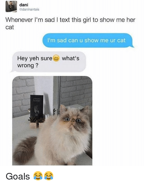 Goals, Memes, and Girl: dani  daninantais  Whenever I'm sad I text this girl to show me her  cat  I'm sad can u show me ur cat  Hey yeh sure  wrong?  what's Goals 😂😂