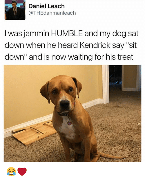 "Memes, Humble, and Jammin: Daniel Leach  @THEdanmanleach  I was jammin HUMBLE and my dog sat  down when he heard Kendrick say ""sit  down"" and is now waiting for his treat 😂❤️"