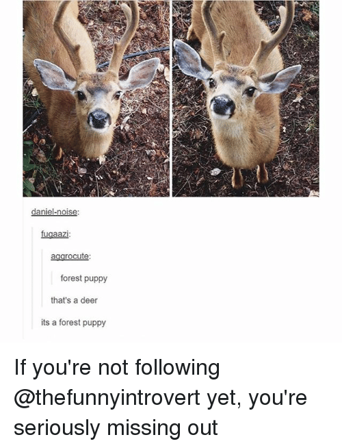 Deer, Funny, and Puppy: daniel-noise  fugaazi:  agarocute:  forest puppy  that's a deer  its a forest puppy If you're not following @thefunnyintrovert yet, you're seriously missing out