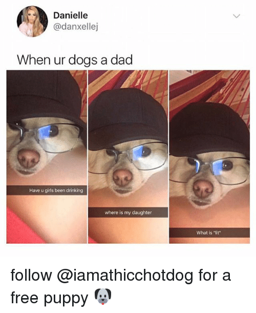 Dad, Dogs, and Drinking: Danielle  @danxellej  When ur dogs a dad  Have u girls been drinking  where is my daughter  What is lit follow @iamathicchotdog for a free puppy 🐶