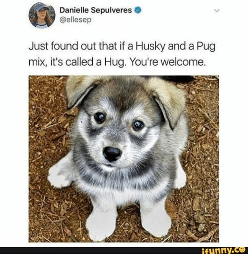 Welcome Funny: Danielle Sepulveres  @ellesep  Just found out that if a Husky and a Pug  mix, it's called a Hug. You're welcome.  funny.ce