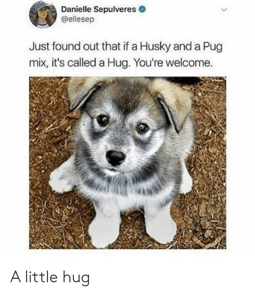 danielle: Danielle Sepulveres  @ellesep  Just found out that if a Husky and a Pug  mix, it's called a Hug. You're welcome. A little hug