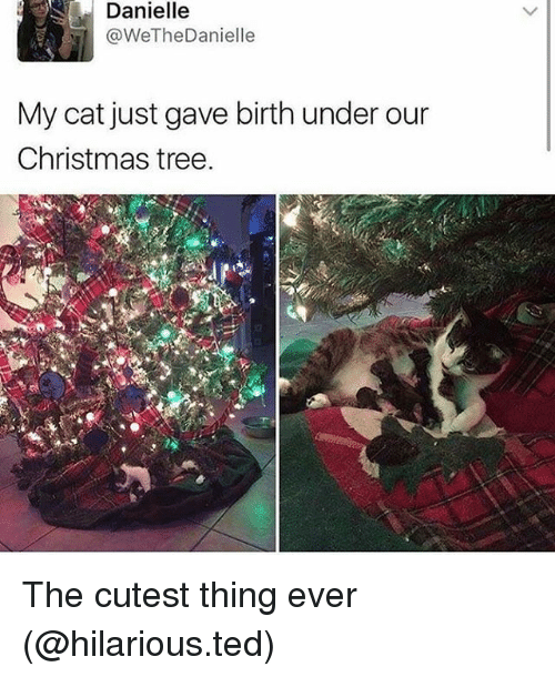 Christmas, Funny, and Ted: Danielle  @WeTheDanielle  My cat just gave birth under our  Christmas tree. The cutest thing ever (@hilarious.ted)