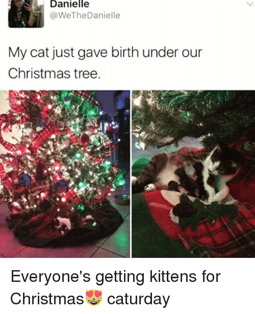 Caturday, Christmas, and Funny: Danielle  @WeTheDanielle  My cat just gave birth under our  Christmas tree. Everyone's getting kittens for Christmas😻 caturday