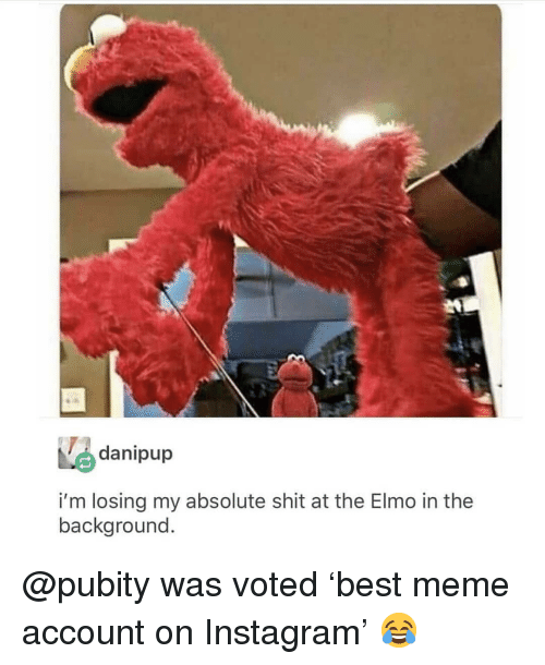 Elmo, Instagram, and Meme: danipup  i'm losing my absolute shit at the Elmo in the  background @pubity was voted 'best meme account on Instagram' 😂