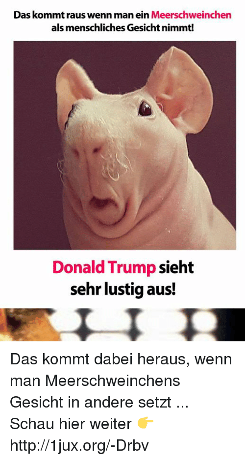 25 best memes about donald trump and german language. Black Bedroom Furniture Sets. Home Design Ideas