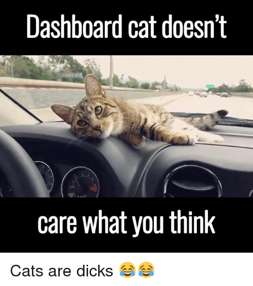 Thinking Cat: Dashboard cat doesn't  care what you think Cats are dicks 😂😂