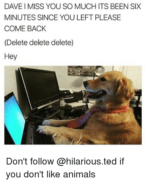 i miss you so much: DAVE I MISS YOU SO MUCH ITS BEEN SIX  MINUTES SINCE YOU LEFT PLEASE  COME BACK  (Delete delete delete)  Hey  otro Don't follow @hilarious.ted if you don't like animals