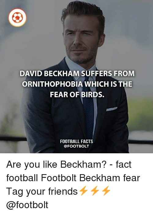 Memes, 🤖, and Beckham: DAVID BECKHAM SUFFERS FROM  ORNITHOPHOBIA WHICH IS THE  FEAR OF BIRDS.  FOOTBALL FACTS Are you like Beckham? - fact football Footbolt Beckham fear Tag your friends⚡️⚡️⚡️ @footbolt