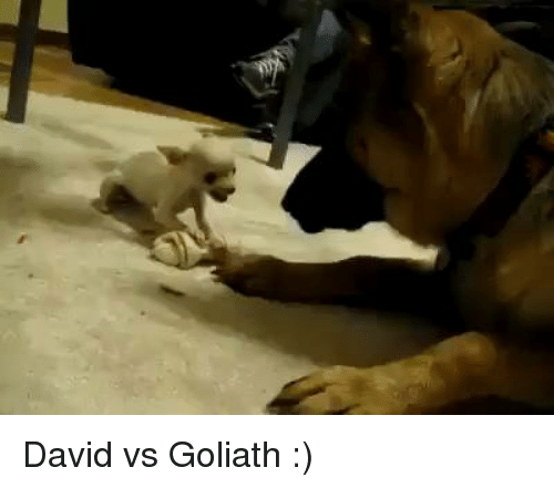 Dank, 🤖, and Goliath: David vs Goliath :)