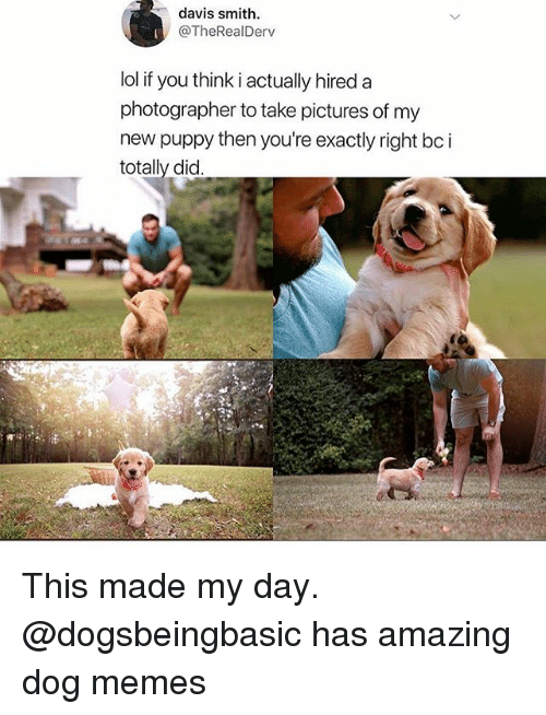 Funny, Lol, and Memes: davis smith  @TheRealDerv  lol if you think i actually hireda  photographer to take pictures of my  new puppy then you're exactly right bc i  totally did This made my day. @dogsbeingbasic has amazing dog memes