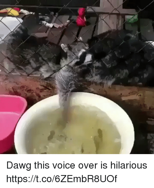Dawgs: Dawg this voice over is hilarious https://t.co/6ZEmbR8UOf