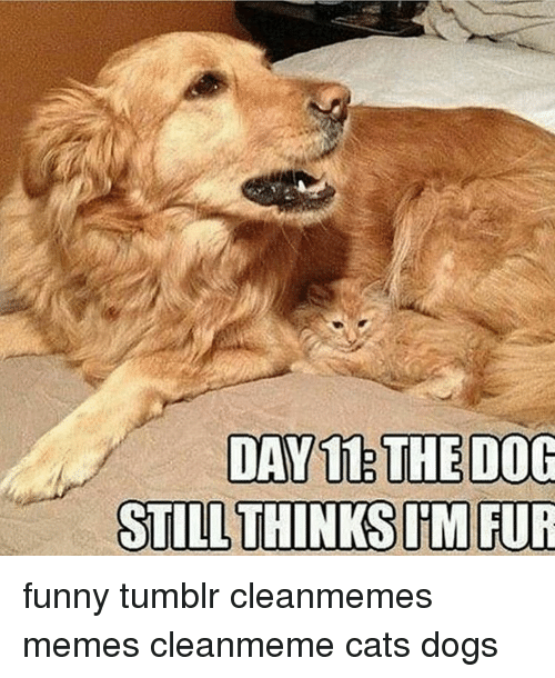 Funny Dog Meme Clean : Day the dog still thinks mrur funny tumblr cleanmemes