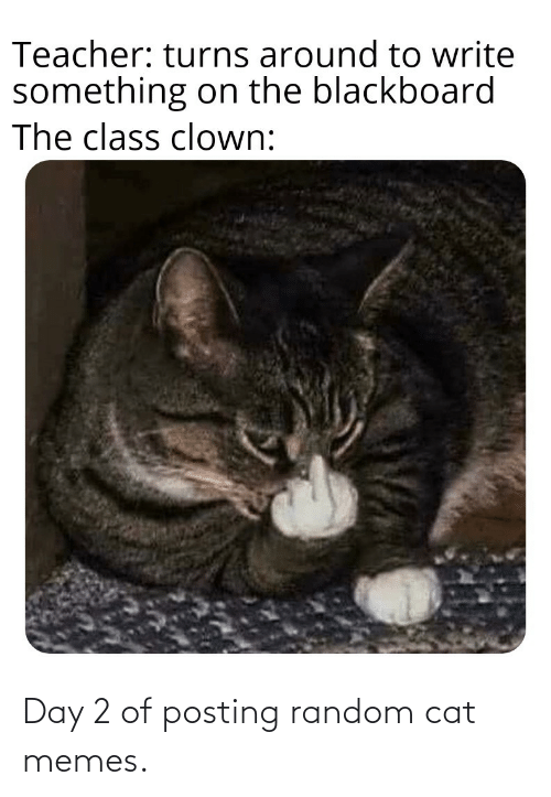 Posting: Day 2 of posting random cat memes.