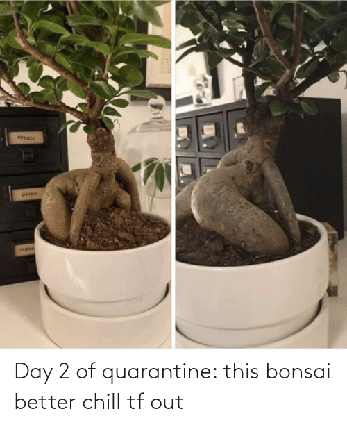 Chill: Day 2 of quarantine: this bonsai better chill tf out