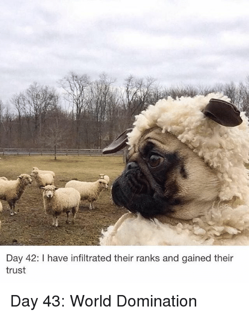 World, Hood, and Day: Day 42: I have infiltrated their ranks and gained their  trust Day 43: World Domination