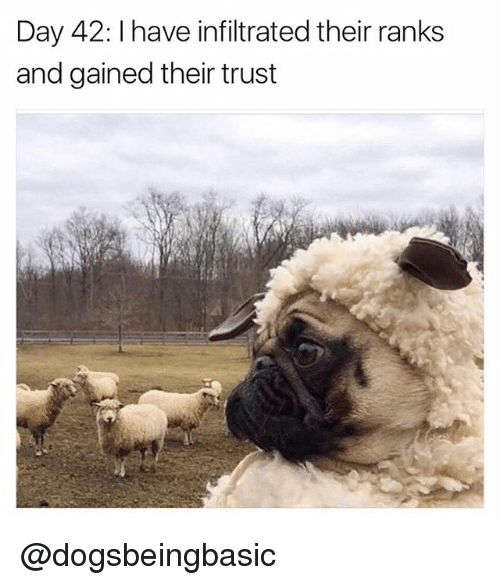 Funny, Meme, and Day: Day 42: I have infiltrated their ranks  and gained their trust @dogsbeingbasic