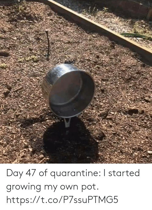 pot: Day 47 of quarantine: I started growing my own pot. https://t.co/P7ssuPTMG5
