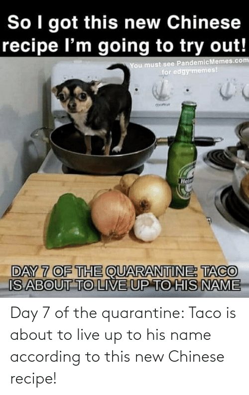 Chinese: Day 7 of the quarantine: Taco is about to live up to his name according to this new Chinese recipe!