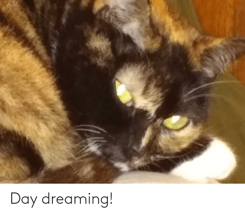 dreaming: Day dreaming!
