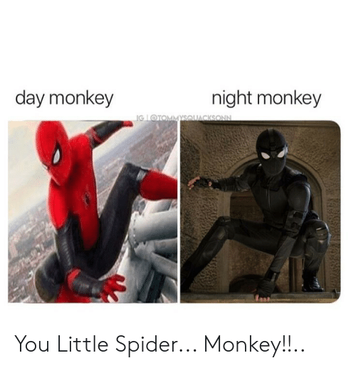 spider monkey: day monkey  night monkey  IG @TOMMYSOUACKSONN You Little Spider... Monkey!!..