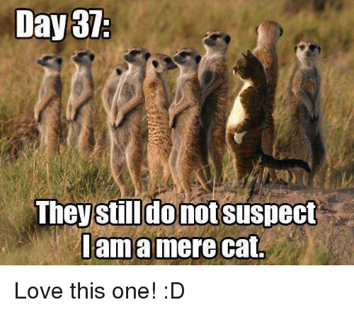 [Image: day37-they-still-donotsuspect-lama-mere-...665615.png]