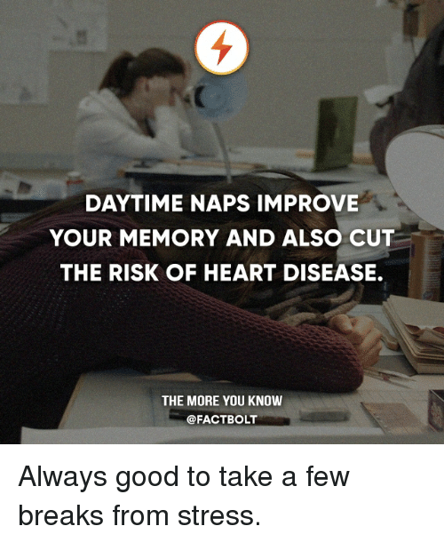 Memes, The More You Know, and Good: DAYTIME NAPS IMPROVE  YOUR MEMORY AND ALSO CUT  THE RISK OF HEART DISEASE.  THE MORE YOU KNOW  @FACT BOLT Always good to take a few breaks from stress.
