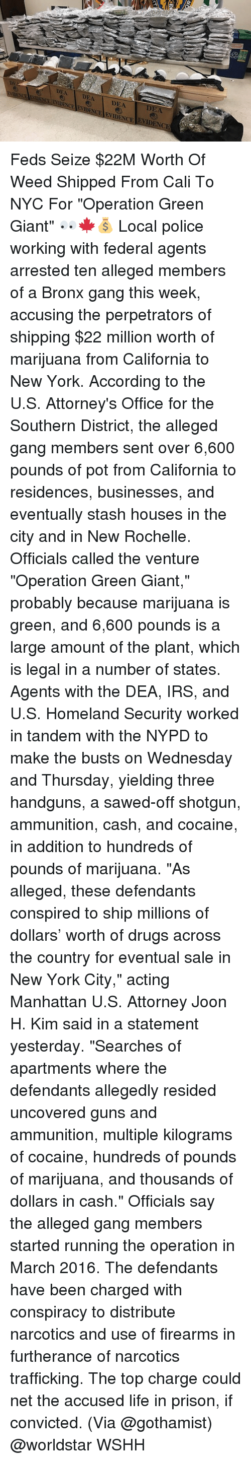 "attorneys: DEA DEA DEA  ENCE FVACEENDENCE ENIDENCE EVIDENCIE  2  DEA Feds Seize $22M Worth Of Weed Shipped From Cali To NYC For ""Operation Green Giant"" 👀🍁💰 Local police working with federal agents arrested ten alleged members of a Bronx gang this week, accusing the perpetrators of shipping $22 million worth of marijuana from California to New York. According to the U.S. Attorney's Office for the Southern District, the alleged gang members sent over 6,600 pounds of pot from California to residences, businesses, and eventually stash houses in the city and in New Rochelle. Officials called the venture ""Operation Green Giant,"" probably because marijuana is green, and 6,600 pounds is a large amount of the plant, which is legal in a number of states. Agents with the DEA, IRS, and U.S. Homeland Security worked in tandem with the NYPD to make the busts on Wednesday and Thursday, yielding three handguns, a sawed-off shotgun, ammunition, cash, and cocaine, in addition to hundreds of pounds of marijuana. ""As alleged, these defendants conspired to ship millions of dollars' worth of drugs across the country for eventual sale in New York City,"" acting Manhattan U.S. Attorney Joon H. Kim said in a statement yesterday. ""Searches of apartments where the defendants allegedly resided uncovered guns and ammunition, multiple kilograms of cocaine, hundreds of pounds of marijuana, and thousands of dollars in cash."" Officials say the alleged gang members started running the operation in March 2016. The defendants have been charged with conspiracy to distribute narcotics and use of firearms in furtherance of narcotics trafficking. The top charge could net the accused life in prison, if convicted. (Via @gothamist) @worldstar WSHH"
