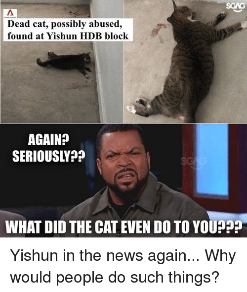 Memes, News, and 🤖: Dead cat, possibly abused,  found at Yishun HDB block  AGAIN?  SERIOUSLVP?  WHAT DID THE CAT EVEN DO TO YOUPP? Yishun in the news again... Why would people do such things?