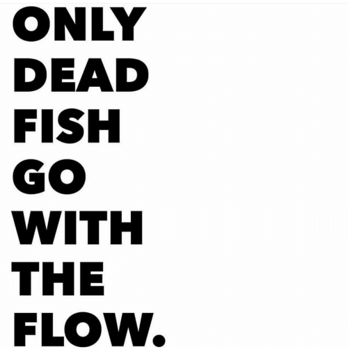 Dead fish go with the flow meme on sizzle for What goes good with fish