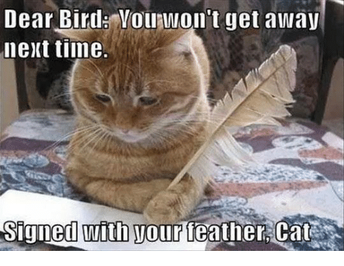 Grumpy Cat, Time, and Cat: Dear Bird Youhwon't get away  next time.  Signed With Wour leather Cat