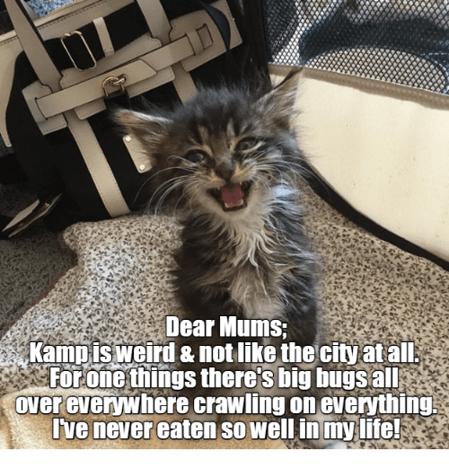 Life, Weird, and Never: Dear Mums;  Kampis weird & not like the city atall  For one things theres big bugs all  overevewhere crawling on eveything  Ive never eaten so wellin my life!