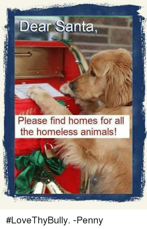 Dear santa please find homes for all the homeless animals for Find builders