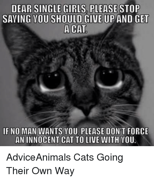 Memes, Adviceanimals, and 🤖: DEAR SINGLE GIRLS PLEASE STOP  SAYING YOU SHOULD GIVE UP AND GET  A CAT  IF NO MAN WANTS YOU PLEASE DON'T FORCE  AN INNOCENT CAT TO LIVE WITH YOU AdviceAnimals Cats Going Their Own Way