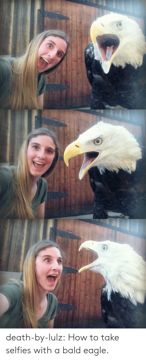 selfies: death-by-lulz: How to take selfies with a bald eagle.