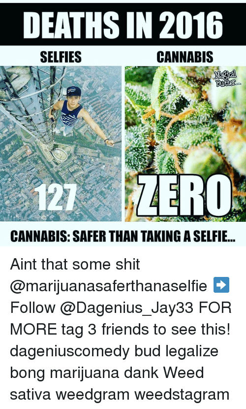 dank weed: DEATHS IN 2016  CANNABIS  SELFIES  Butter  COD  121 ZERO  CANNABIS: SAFER THAN TAKING ASELFIE Aint that some shit @marijuanasaferthanaselfie ➡️ Follow @Dagenius_Jay33 FOR MORE tag 3 friends to see this! dageniuscomedy bud legalize bong marijuana dank Weed sativa weedgram weedstagram