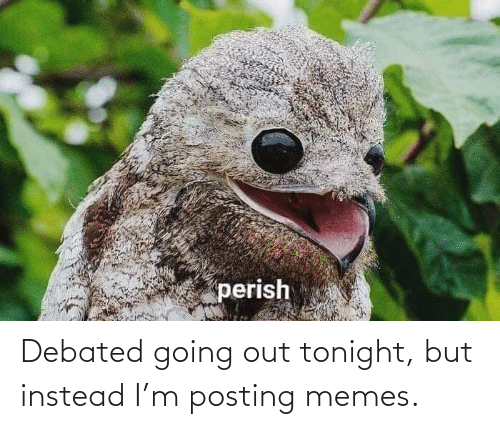 Posting: Debated going out tonight, but instead I'm posting memes.