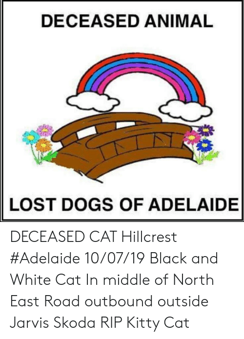 skoda: DECEASED ANIMAL  LOST DOGS OF ADELAIDE DECEASED CAT Hillcrest #Adelaide 10/07/19 Black and White Cat  In middle of North East Road outbound outside Jarvis Skoda RIP Kitty Cat