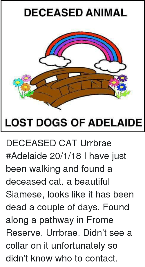 Beautiful, Dogs, and Memes: DECEASED ANIMAL  LOST DOGS OF ADELAIDE DECEASED CAT Urrbrae #Adelaide 20/1/18 I have just been walking and found a deceased cat, a beautiful Siamese, looks like it has been dead a couple of days. Found along a pathway in Frome Reserve, Urrbrae. Didn't see a collar on it unfortunately so didn't know who to contact.