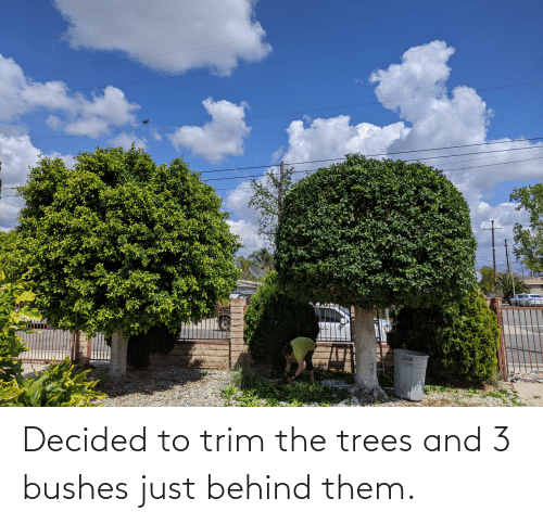 bushes: Decided to trim the trees and 3 bushes just behind them.