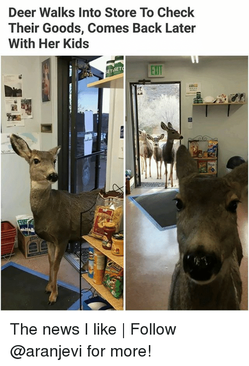 Deer, Memes, and News: Deer Walks Into Store To Check  Their Goods, Comes Back Later  With Her Kids  EXIT  ETSET The news I like   Follow @aranjevi for more!