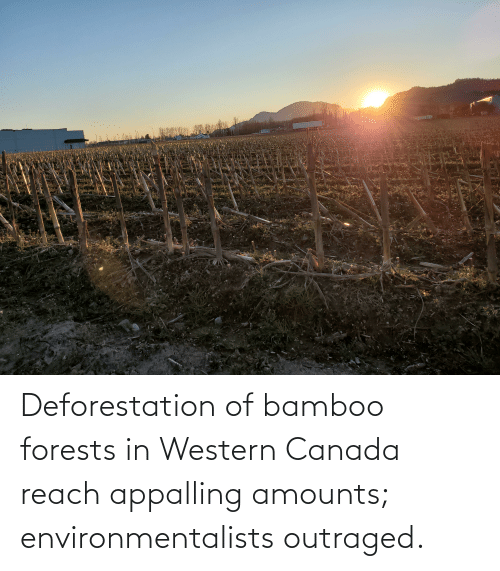 Outraged: Deforestation of bamboo forests in Western Canada reach appalling amounts; environmentalists outraged.