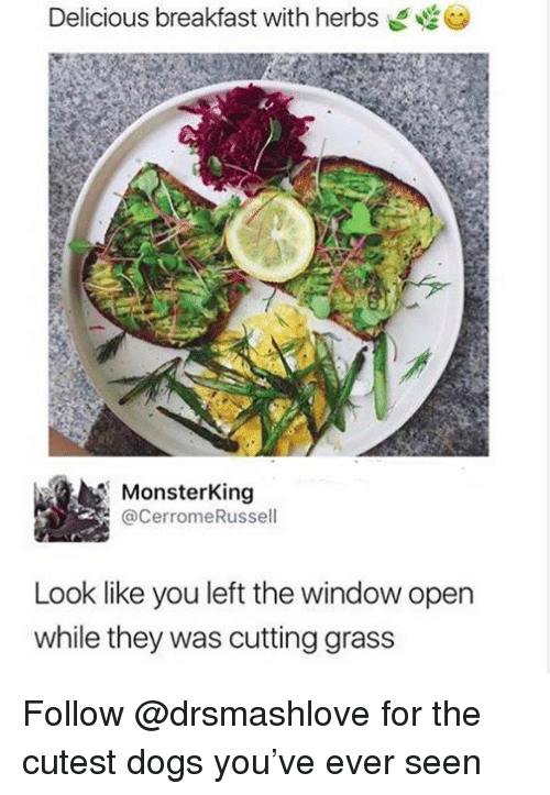Dogs, Funny, and Breakfast: Delicious breakfast with herbs  MonsterKing  @CerromeRussell  Look like you left the window open  while they was cutting grass Follow @drsmashlove for the cutest dogs you've ever seen