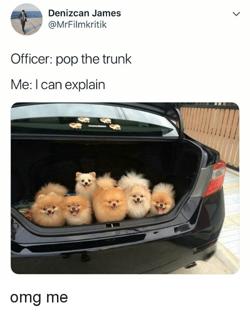 Omg, Pop, and Relatable: Denizcan James  @MrFilmkritik  Officer: pop the trunk  Me: I can explain omg me