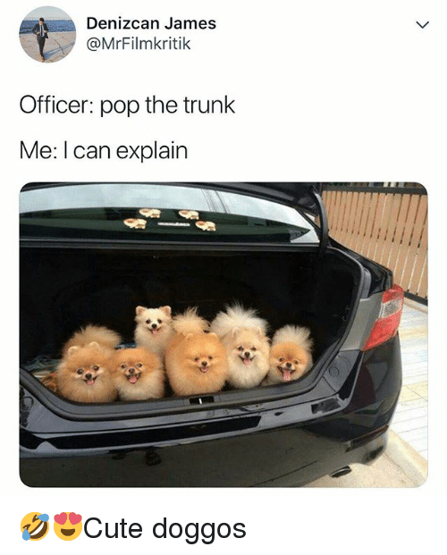 Memes, Pop, and 🤖: Denizcan James  @MrFilmkritik  Officer: pop the trunk  Me: I can explain 🤣😍Cute doggos
