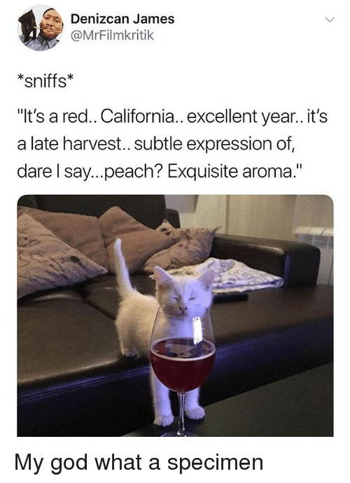 """God, California, and Dank Memes: Denizcan James  @MrFilmkritik  *sniffs  It's a red.. California.. excellent year..it's  a late harvest... subtle expression of,  dare l say...peach? Exquisite aroma."""" My god what a specimen"""