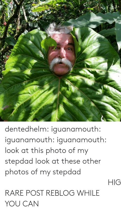 Stepdad: dentedhelm: iguanamouth:  iguanamouth:  iguanamouth:  look at this photo of my stepdad   look at these other photos of my stepdad   look  at  this  Final  Photo  of  my  stepdad  HIGH QUALITY RARE POST REBLOG WHILE YOU CAN