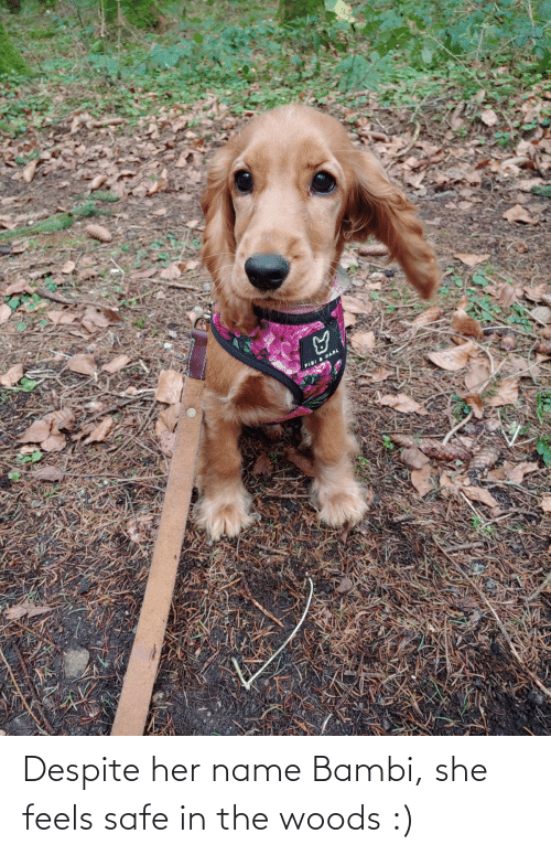 Bambi: Despite her name Bambi, she feels safe in the woods :)