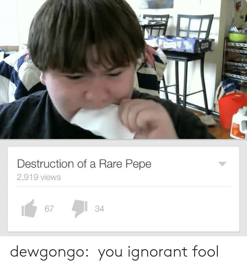 Ignorant, Tumblr, and Blog: Destruction of a Rare Pepe  2,919 views  67  34 dewgongo:   you ignorant fool